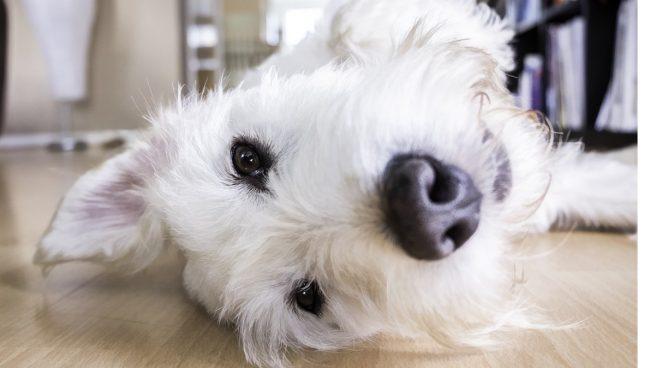 Beseitigen Sie den Geruch von Hundehütten