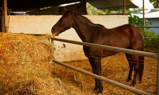 La preparación de espacio para tu caballo