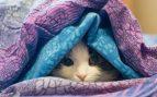 Los vómitos en gatos