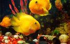 peces de agua fría