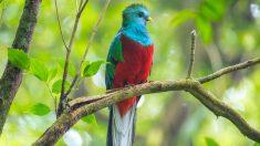 Pájaros tropicales más conocidos