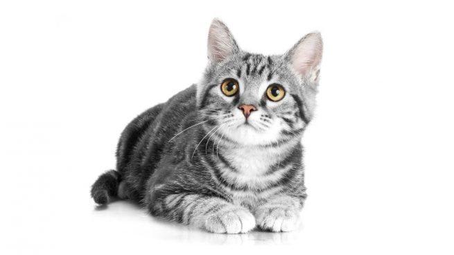 Cosas que tu gato odia