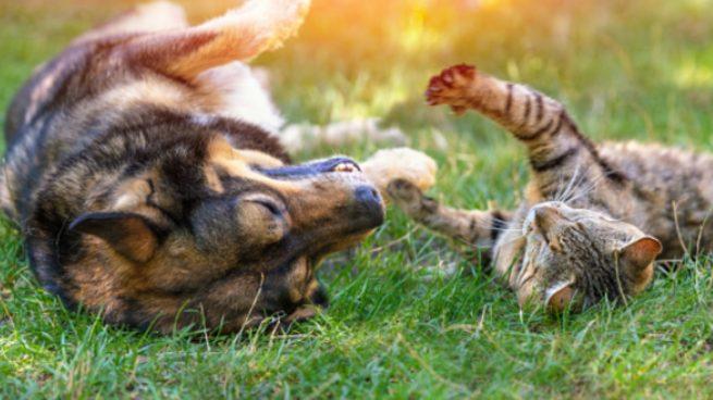 Cómo alejar perros y gatos del jardín