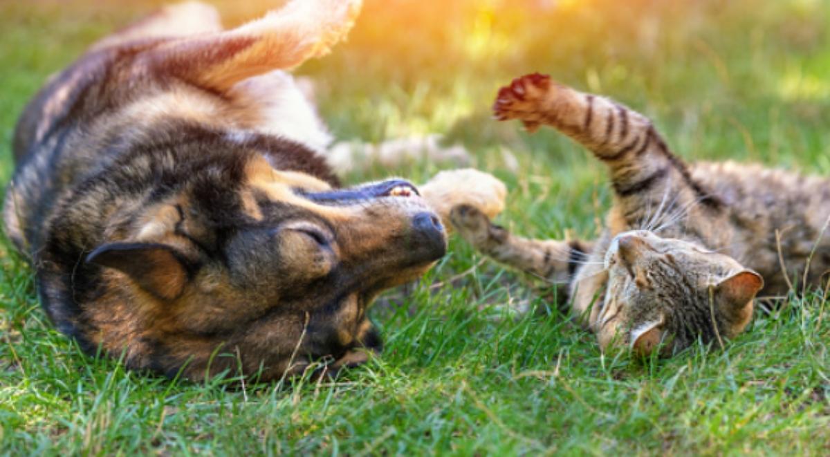 Pasos para alejar perros y gatos del jardín