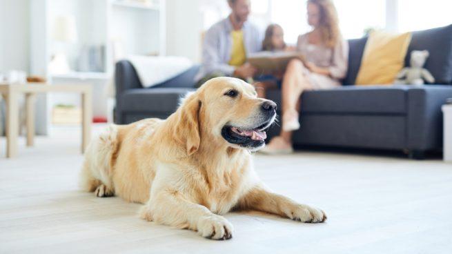 Tu perro en la familia
