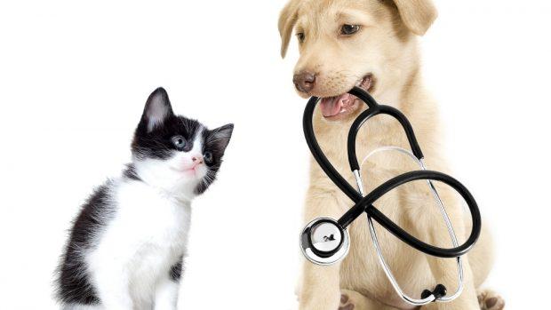 biopsia en perros y gatos