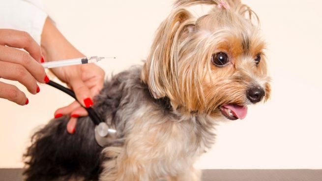 Vacunas para tu cachorro