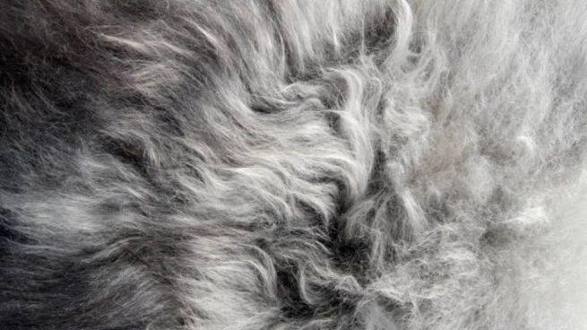 como limpiar una alfombra de pelo largo