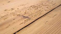 Pasos para tapar los agujeros de la carcoma en la madera