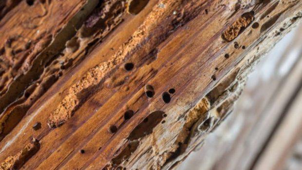 como tapar los agujeros de la carcoma en la madera