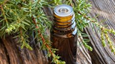 Cómo usar el aceite de enebro para tratar dolores musculares paso a paso