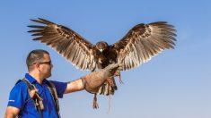 Clases conocidas de águilas