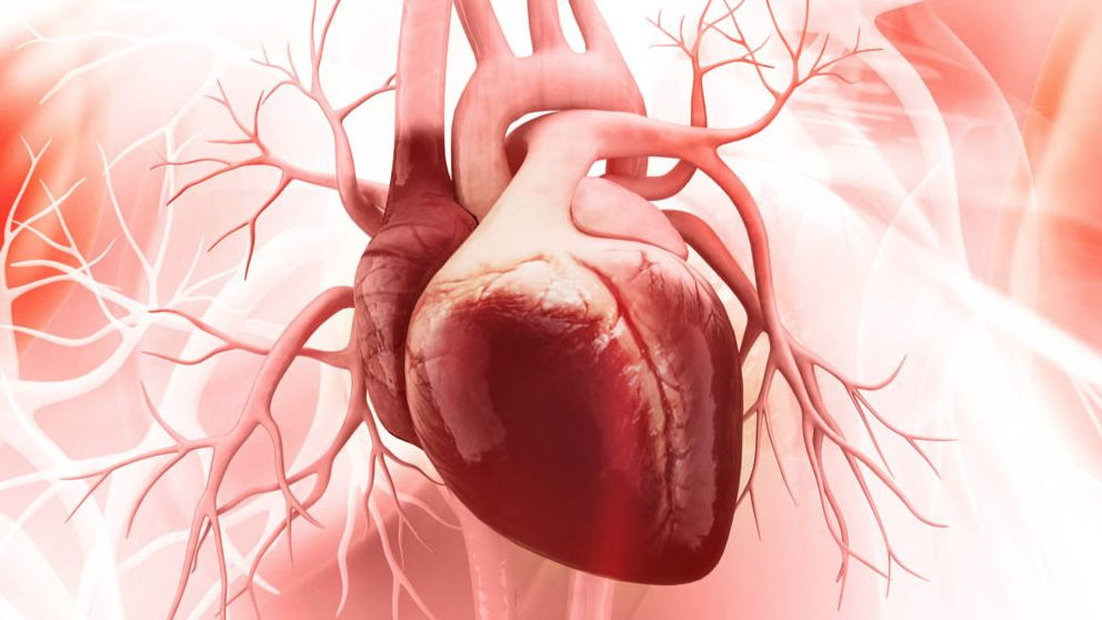 Corazón: 7 datos sobre este órgano que debes conocer