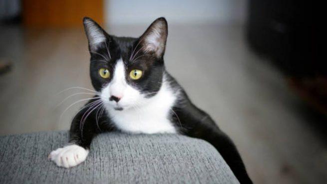 evitar que el gato arañe tu sofá