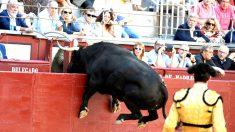 Un toro se abalanza sobre la grada este sábado en Las Ventas (Foto: EFE).