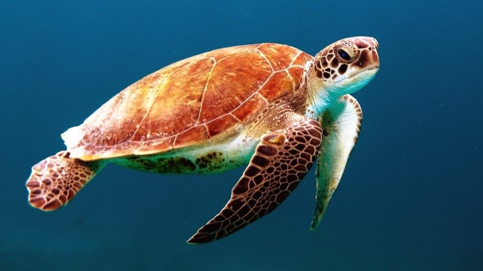 Las tortugas pueden llegar a vivir más de cien años