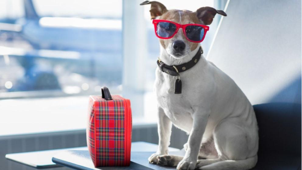 Las mascotas también tienen derecho a disfrutar de unas vacaciones