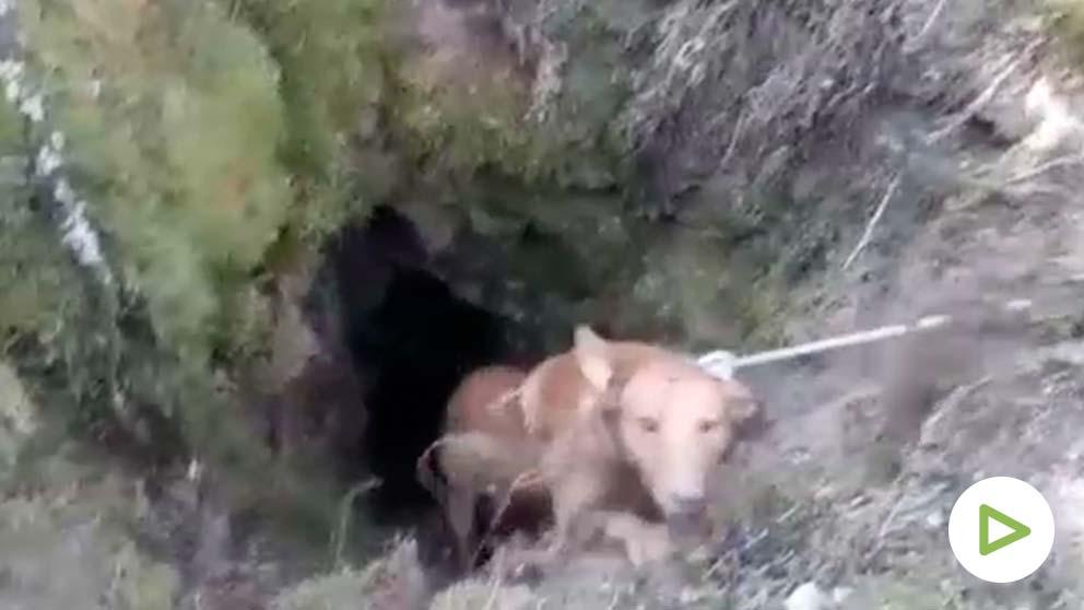 El increíble rescate de los bomberos a dos perros atrapados en un pozo.