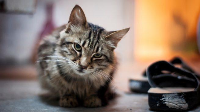 Tu gato solo en casa