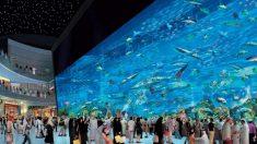 Descubre cuál es el centro comercial más grande del mundo