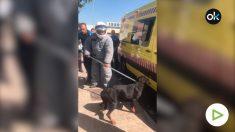 Imagen de cómo la policía ha cogido al perro que ha matado a su dueño a mordiscos en la cara