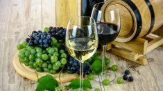 Las uvas son una de las frutas más consumidas en todo el mundo