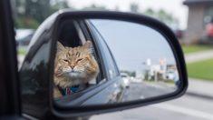 Facebook: El gato de la familia aparece en el aeropuerto