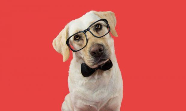 La inteligencia de tu perro