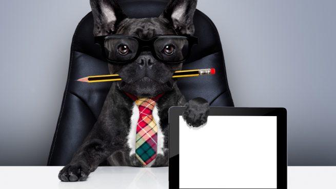 Potenciar la inteligencia de tu perro