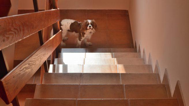 Convivencia propietarios perros