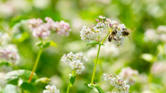 Las abejas y el ecosistema