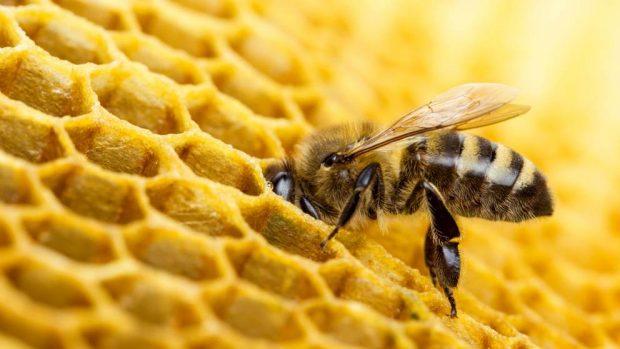 Las abejas al ecosistema