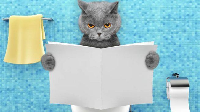 Incontinencia en gatos