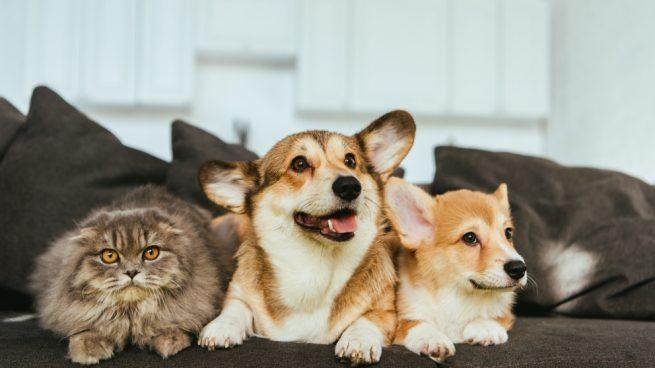 Mascotas de interior y de exterior