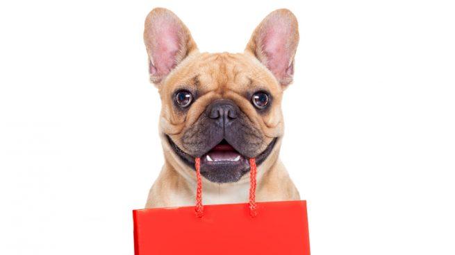 Comprar un cachorro de perro