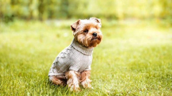 hacer jersey para el perro