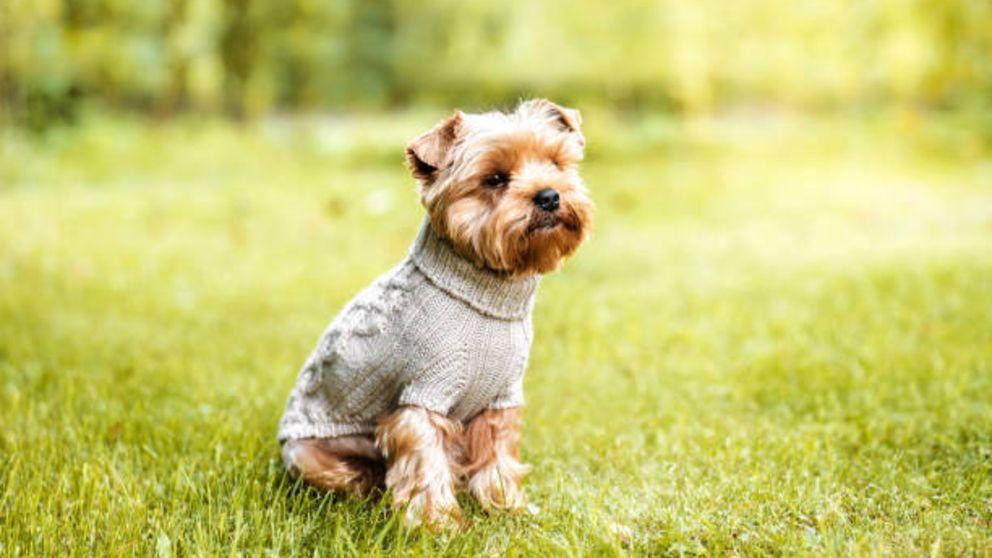 Guía de pasos para hacer un jersey para el perro