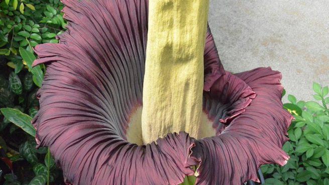 Todos conocemos muchas de las flores que habitan en la gran parte de los jardines comunes.