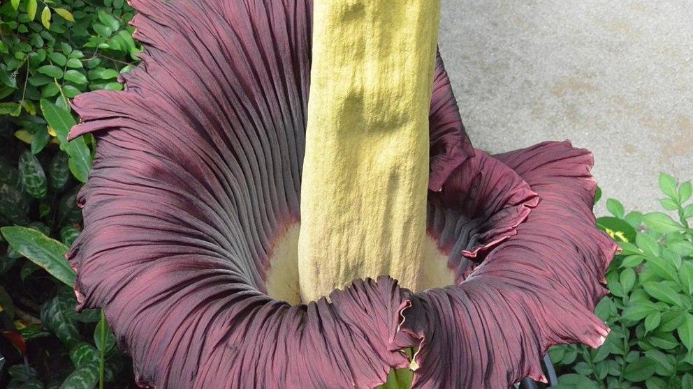 8 flores insólitas y extrañas