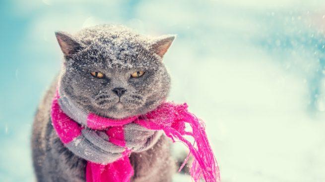 Gato no come por el frío