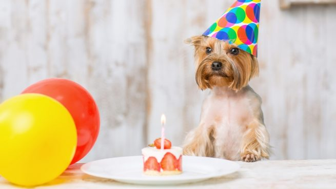 Pastel saludable para tu mascota