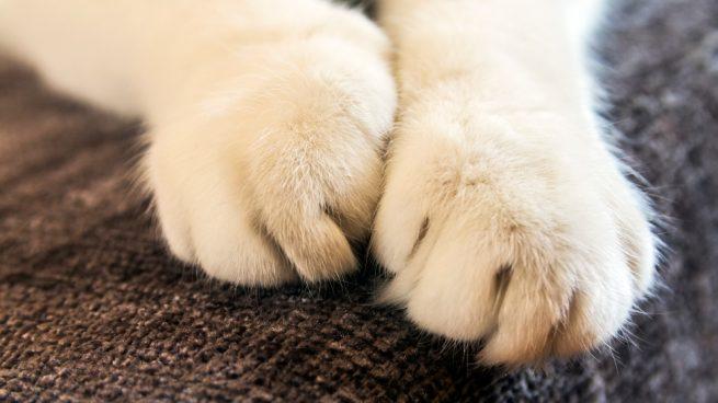 Usa tu gato sus uñas
