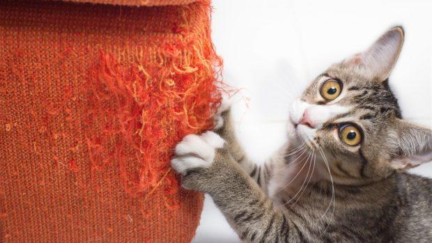 Usos de las uñas del gato