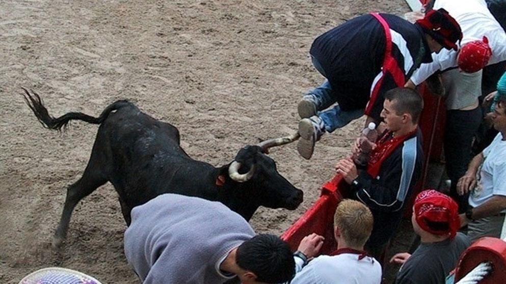 Encierros de Ampuero (Cantabria)