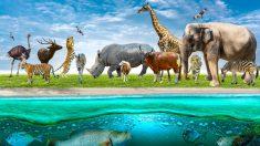 Influencia de las feromonas en animales