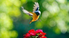 Consejos sobre los pájaros en tu jardín