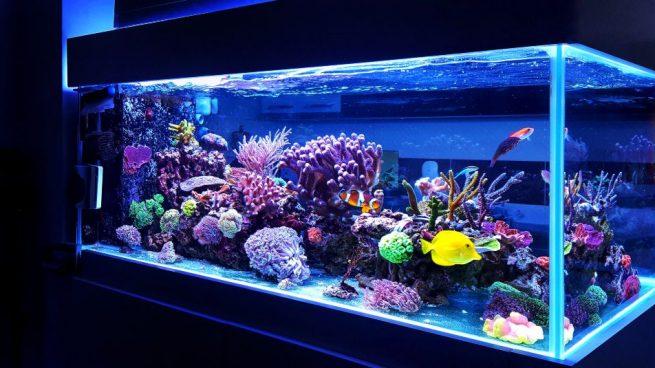 Los tipos de agua ideales para tu acuario en casa - Acuario en casa ...