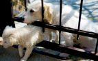 Razones de que se escapa un perro de casa
