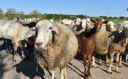 Cría de ovejas y cabras