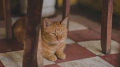 Los gatos pueden colarse fácilmente en una casa o jardín